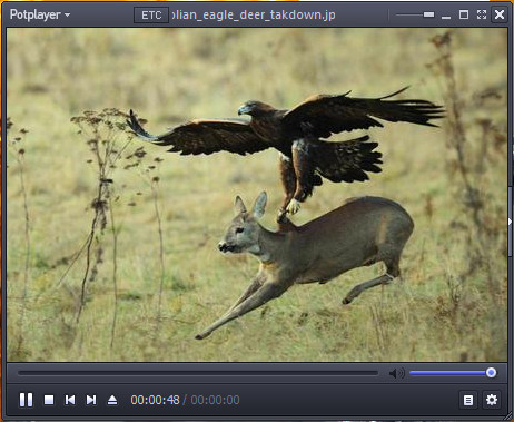 http://rahroclip.ir/wp-content/uploads/2017/01/Deer-Hunting-by-Eagle.jpg